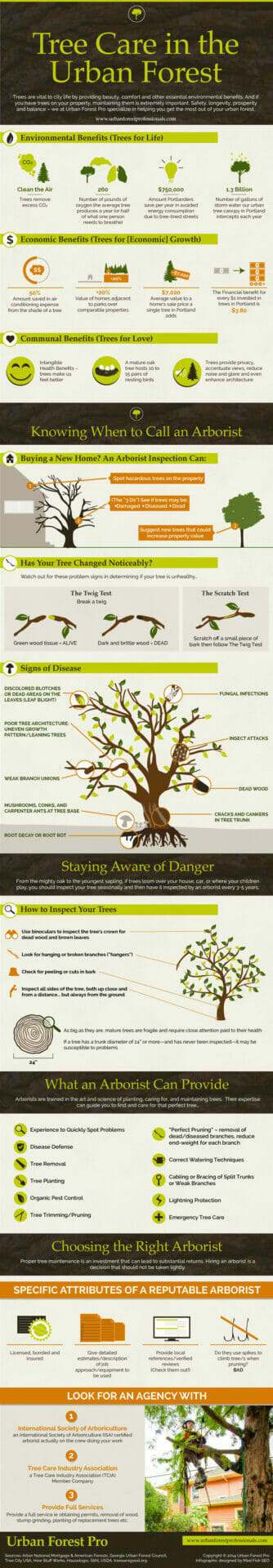 Tree care in the Urban Forest (infographic)