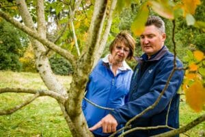 Arborist Tree Inspection how to tell if a tree is dead or dying