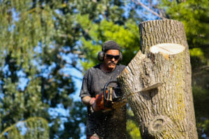 Arborist removing tree in Beaverton, OR