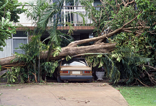 tree laying on house and car after storm requiring emergency tree removal