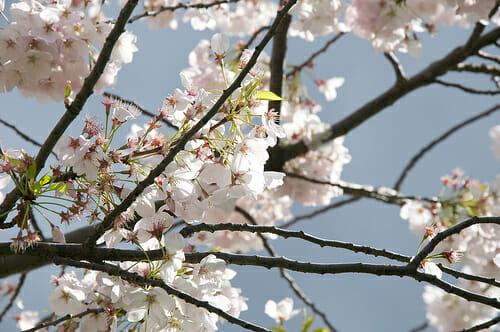 Spring tree care