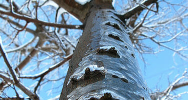 Icy Tree by OakleyOriginals, on Flickr.com