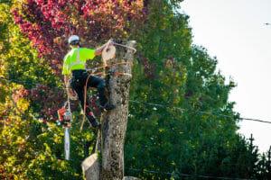lake oswego or tree removal
