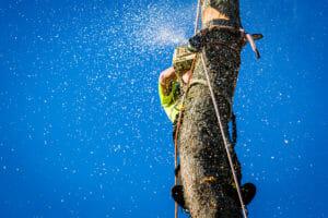 lake oswego oregon tree services company