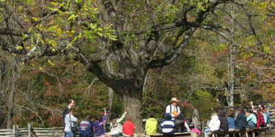 Teaching tree classes outside