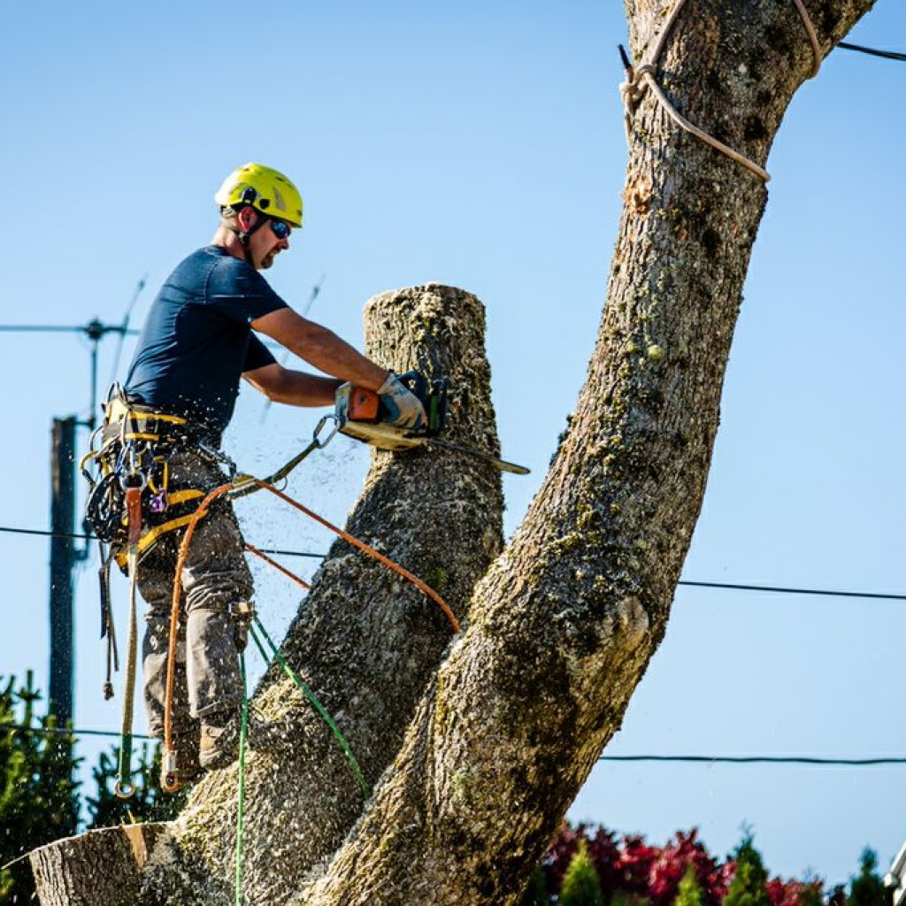 Certified Arborists at work