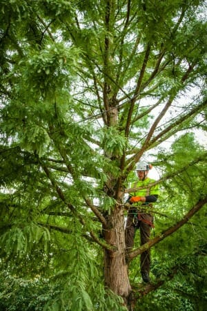 Tree Removal Portland Oregon