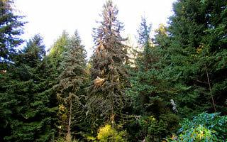 Portland, OR by jeffgunn, on Flickr.com