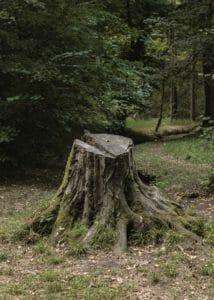 Portland Oregon Stump Rot