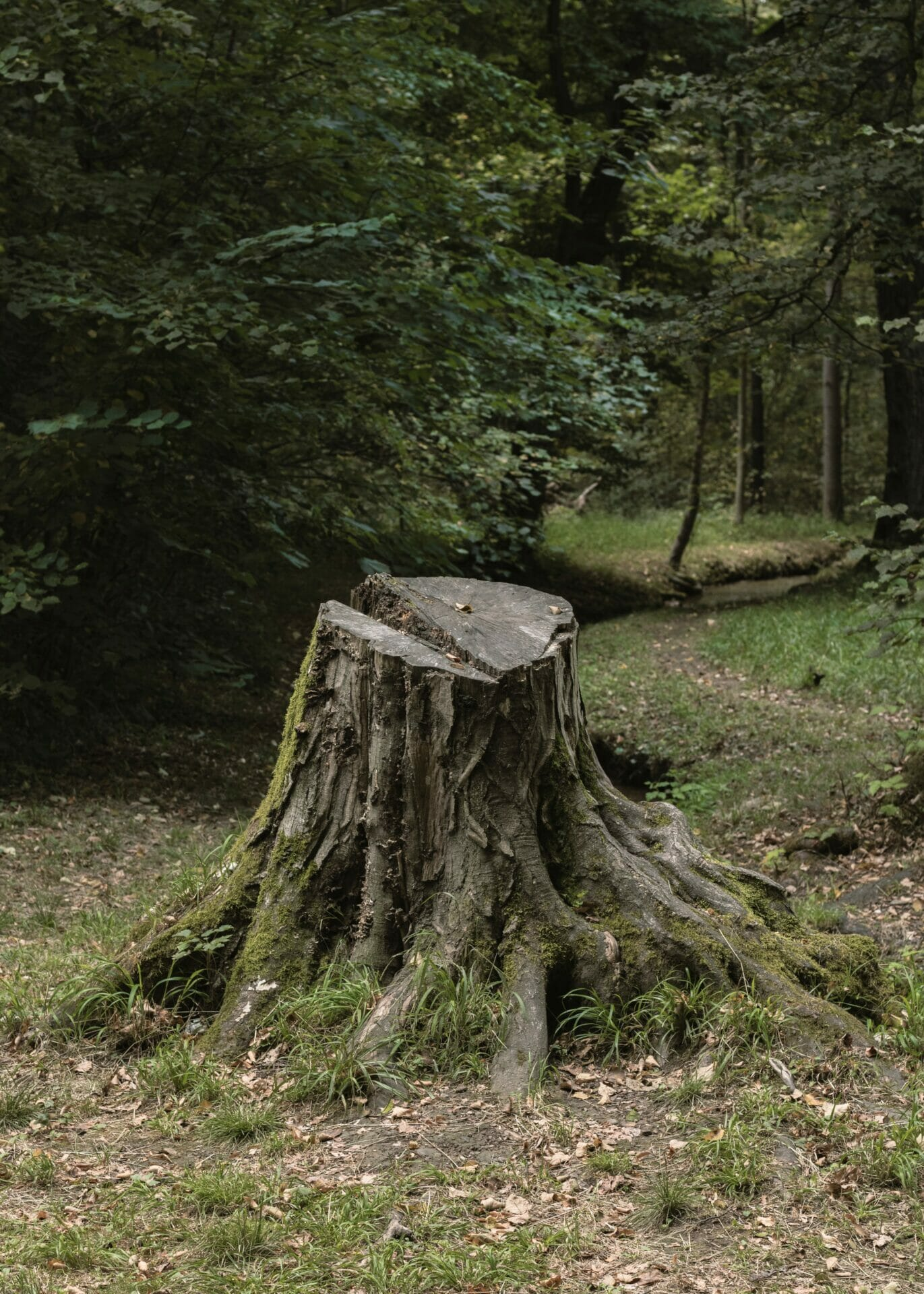 How To Rot A Tree Stump Quickly 7 Steps For Rotting