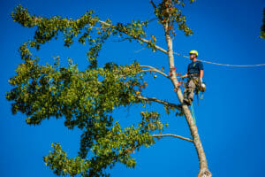 tigard oregon tree removal