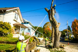 tigard or tree services and tree removal