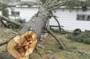 Fallen tree on a home