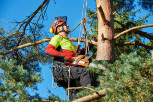 Pruning a tree in Beaverton