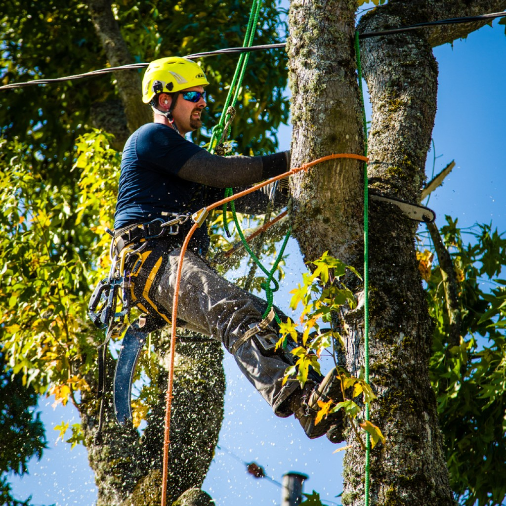 Portland Tree Removal - Urban Forest Professionals