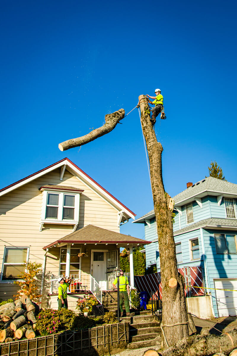 Tree Removal Cost Portland