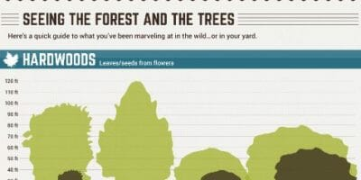 Tree Pruning Infographic snippet