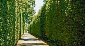 Tall tree lined driveway