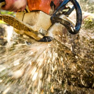 Chainsaw Tree Removal in portland, beaverton, tigard, milwaukie, vancouver