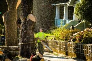 Removing Tree