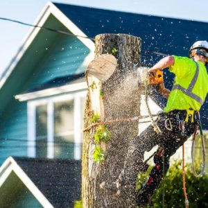 Tree Removal Services Portland OR