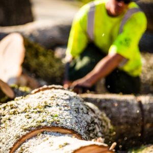 Tree Removal Service Portland OR