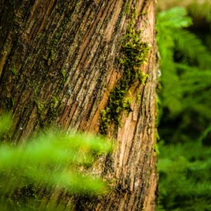 Portland OR Tree Removal Permits