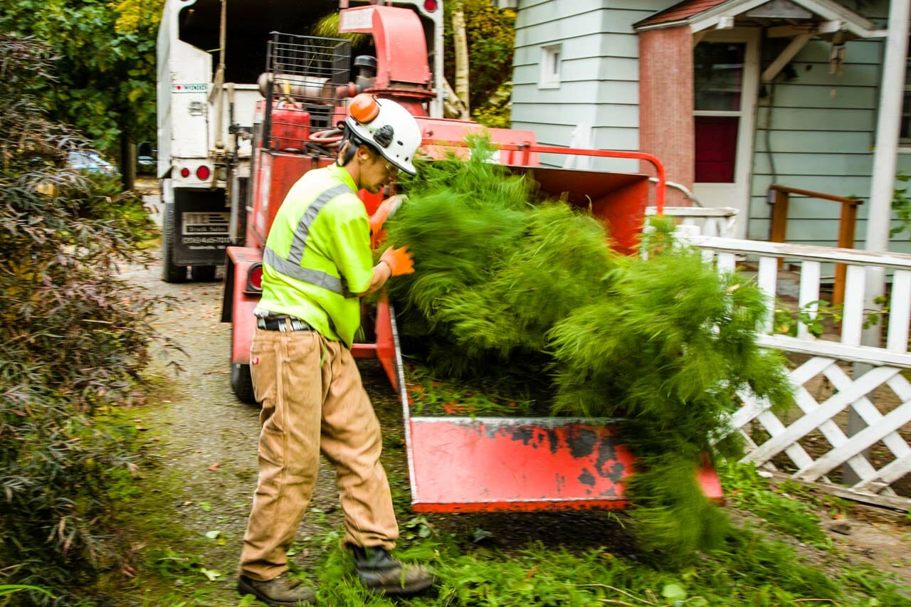 Tree Care Services in Portland Oregon