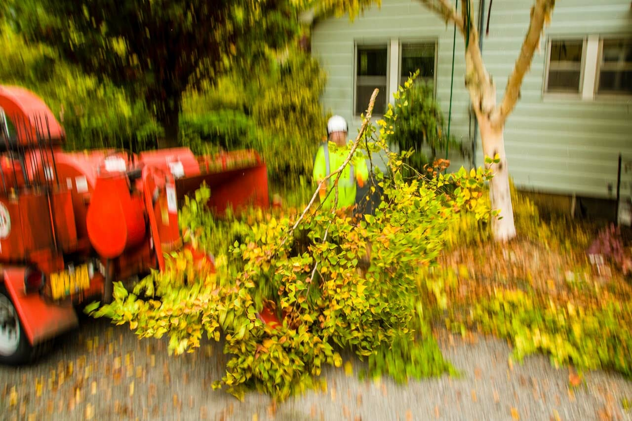 Tree Care in Portland Oregon