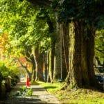 Portland OR Deep Root Fertilization