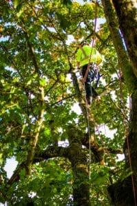 Tualatin Tree Pruning
