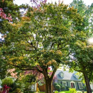 Deep Root Tree Fertilization Portland OR