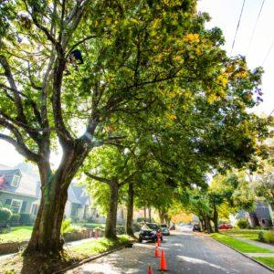 Portland OR Tree Planting