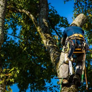 Height Reduction Pruning Portland OR