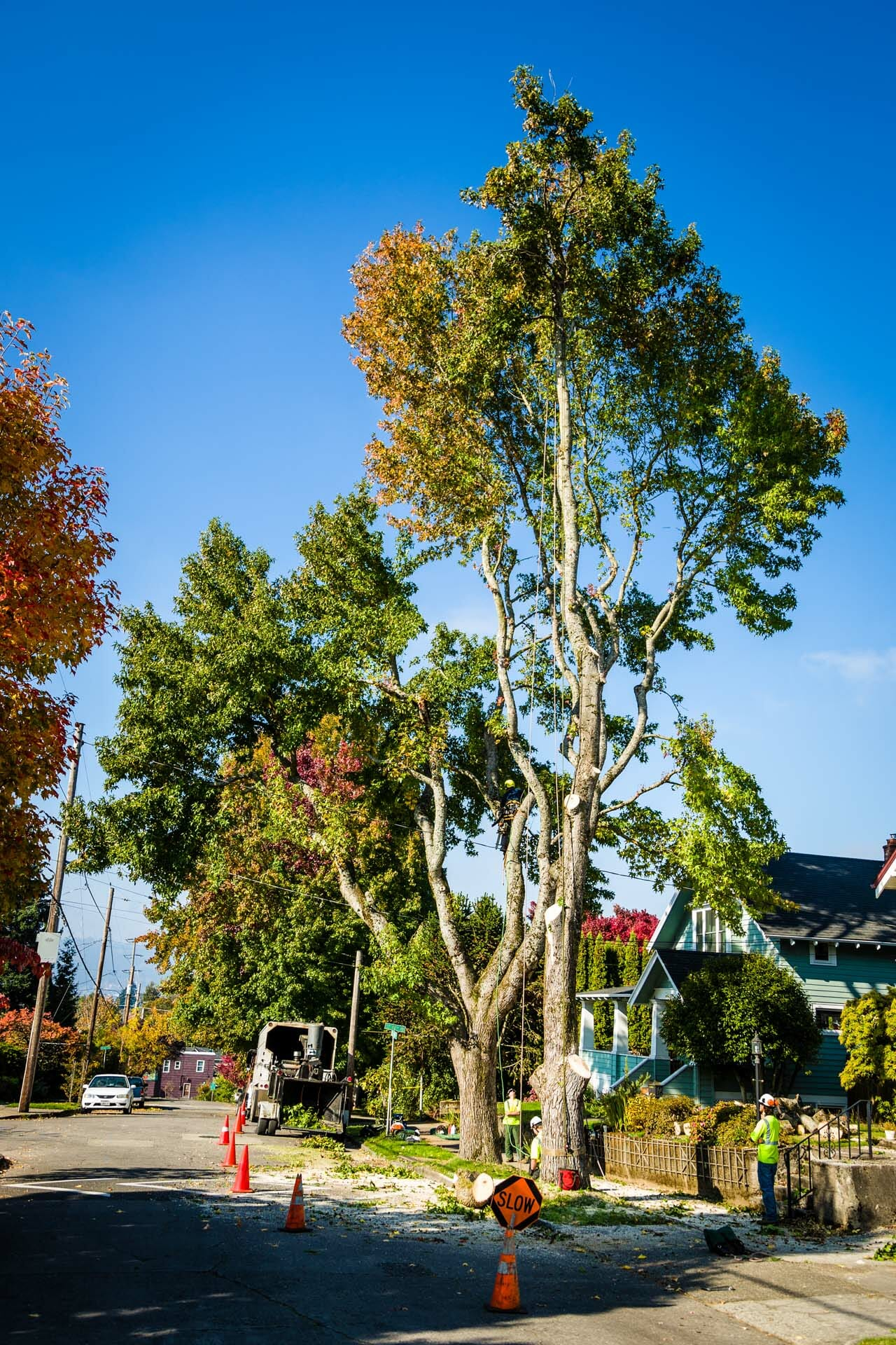 Tree Care Services with Safety Measures
