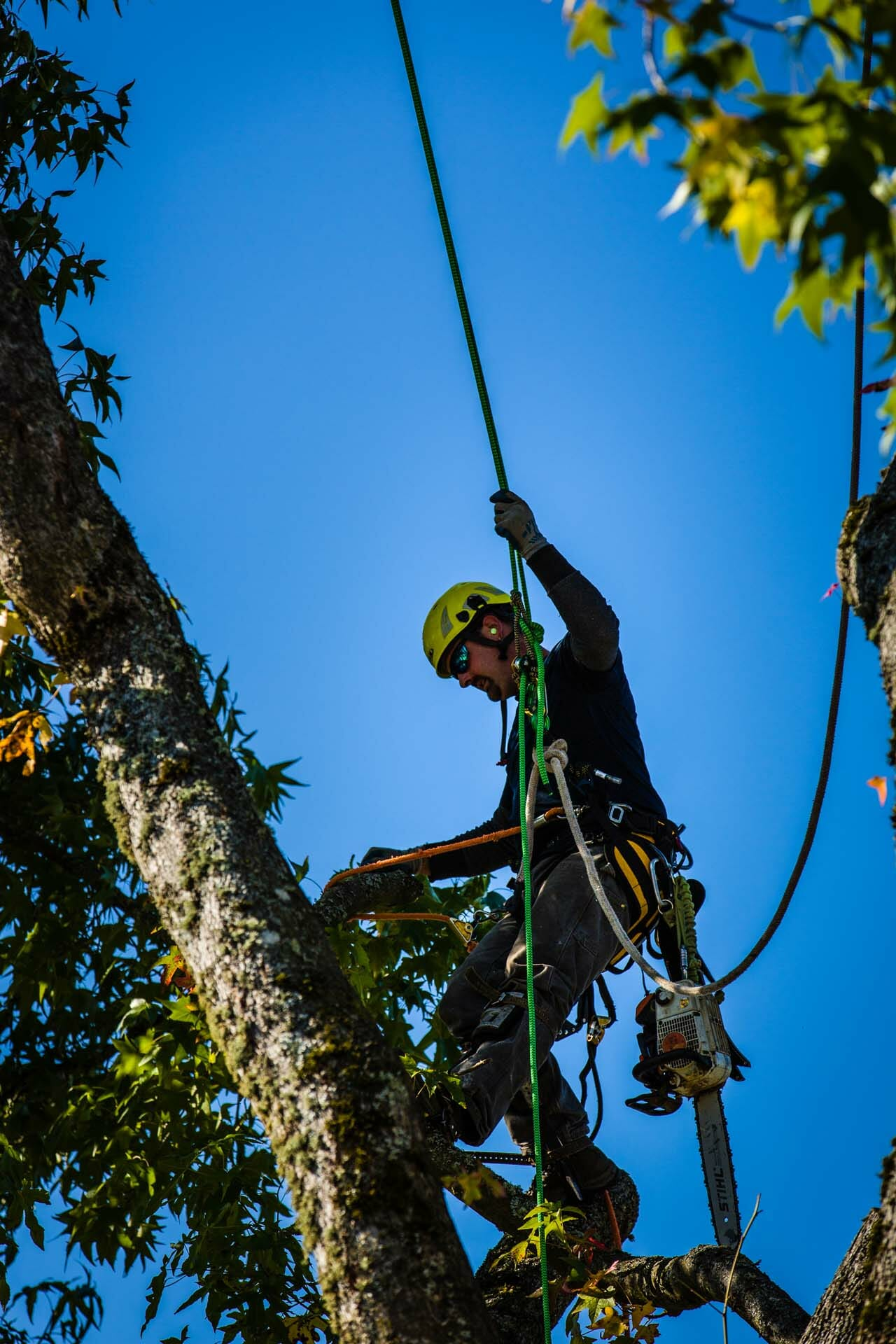 Tree Pruning with Safety Equipment