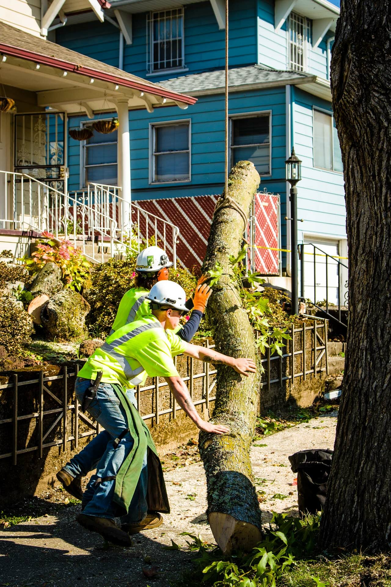 Certified Arborists Trimming Tree at Portland Home