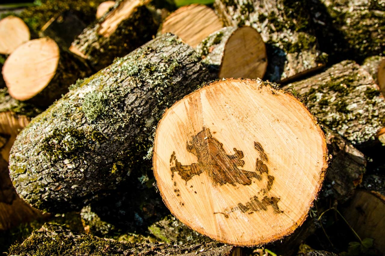 Tree Trimming Left Over Wood
