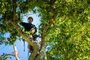 Clackamas Tree Pruning