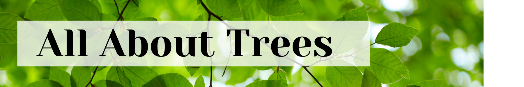 all about trees urban forest pro
