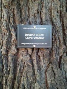 Heritage Tree Plaque