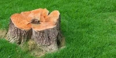 Picture of a stump in the aftermath of deciding when to remove a tree.