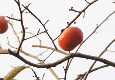 Winter Fruit Tree Pruning Workshop