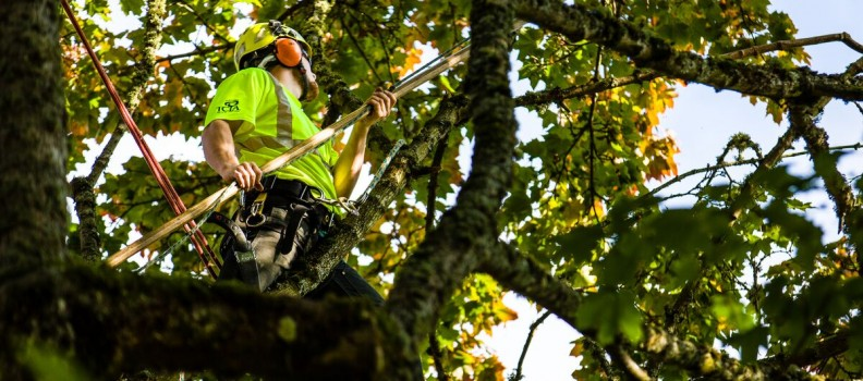 Benefits of Tree Pruning in the Summer