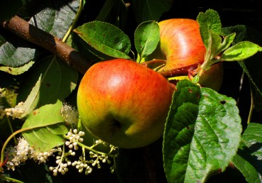 Organic Pest Control for Your Fruit Trees