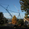 Negative Impacts of Construction on Living Tree Health