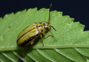 Oregon Fall Tree Pest Control: Help Your Trees Fend Off Pests