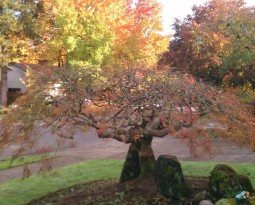 Tree Care Tips: Late Fall Fertilization