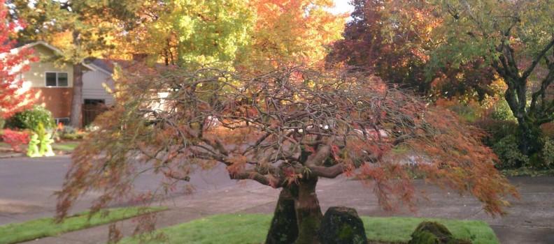 Tree Care Tips: Late Fall Fertilization