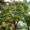 Portland Tree Permit Series: Take Care of Tree Services Now